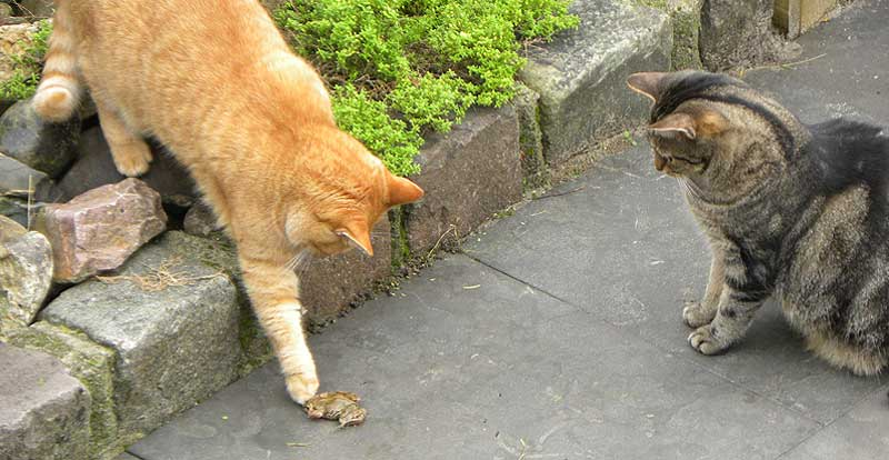Kat weg of kat kwijt